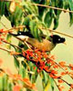 Bird watching trip in Nepal